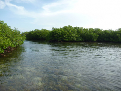 mangroves channel 1.jpg
