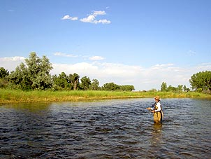 Fly Fishing Bighorn River